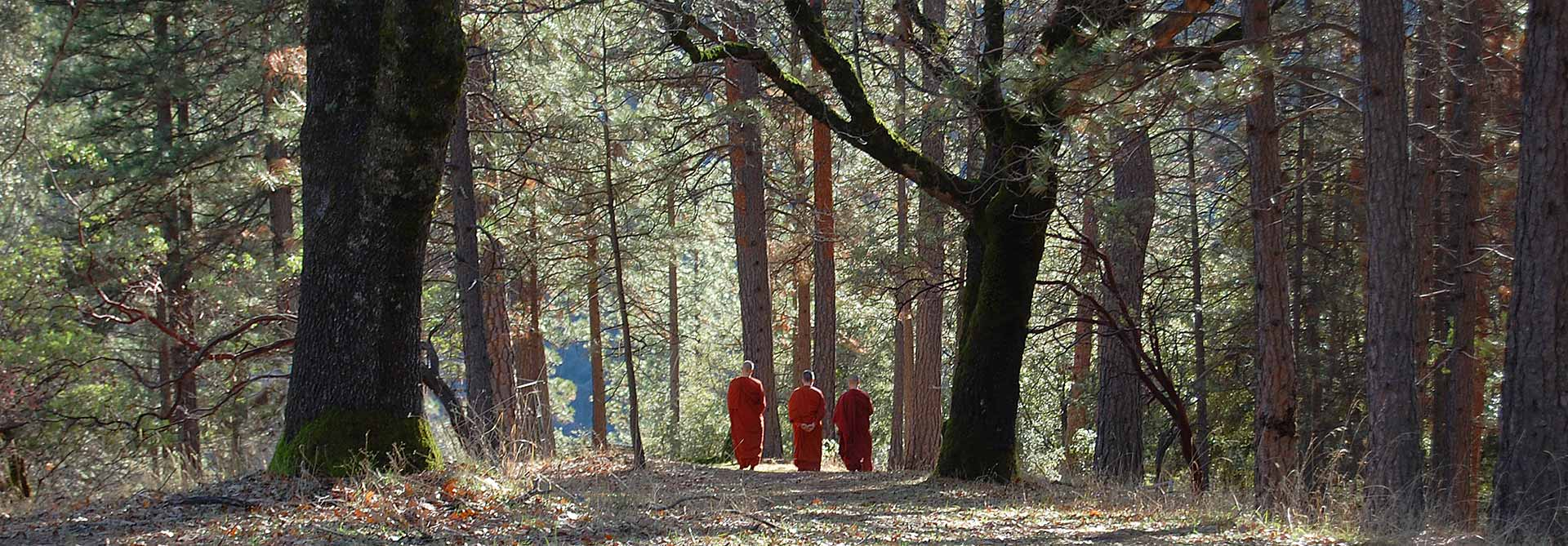 Aloka Vihara Forest Monastery-nuns walking together