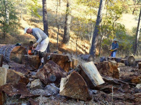 Robert & Neil turning fallen trees into fire wood